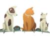 Vloerdisplay hond en katten